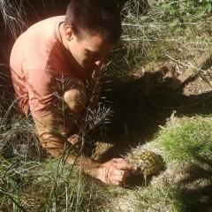 Istraživanje o kornjačama Karla Maškarića